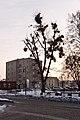 Drzewo z jemiołami z mostu Madalińskiego - panoramio.jpg