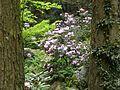 Dscn0264 japan nature.jpg