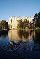 Duck in Kristine distric (8053693908).jpg
