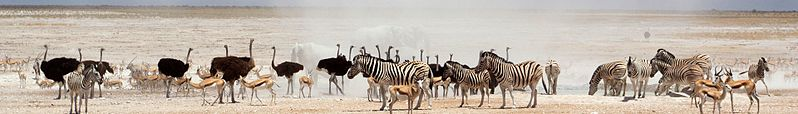File:Dust Cloud Etosha National Park banner.jpg