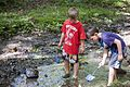 Each summer one of the most popular programs at Hungry Mother State Park is the Critter Crawl where the participants investigate what lives in a creek at the park. - AA (19122698511).jpg