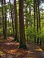 Eastern Hemlock grove, Salt Springs State Park.jpg