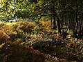 Edge of Rora Wood - geograph.org.uk - 1013170.jpg