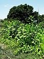Edible Schoolyard Berkeley 70.jpg