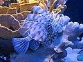 Eilat Coral World Underwater Observatory 13.jpg