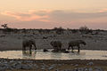 Elephants bathing at Okaukuejo waterhole (3688064126).jpg