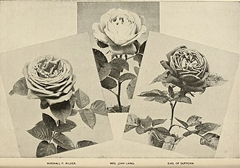 Ellwanger and Barry - Mount Hope nurseries (1899) (21264961732).jpg