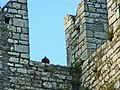 Emperor's Castle-something on the battlements.jpg