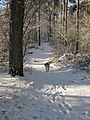 En dejlig vinterdag - panoramio.jpg