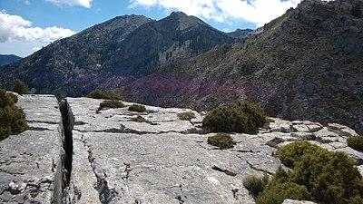 Encima del Tajo de la Caína - Parque Natural Sierra de las Nieves.jpg