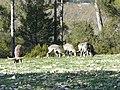 Enclos d'herbivore (2364135742).jpg