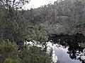 Endrick river at Nerriga Road bridge looking north.jpg