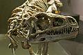 Eoraptor lunensis DSC 6162.jpg