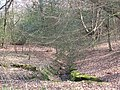 Epping Forest, minor stream - geograph.org.uk - 1213156.jpg