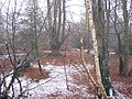Epping Forest near Wake Valley Pond - geograph.org.uk - 102438.jpg