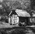Erjavčev hlev, notri koza, Velike Češnjice 1950.jpg