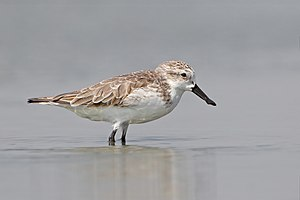 Kangryong Field - The site is important for spoon-billed sandpipers as passage migrants