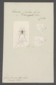 Evania - Print - Iconographia Zoologica - Special Collections University of Amsterdam - UBAINV0274 046 10 0002.tif