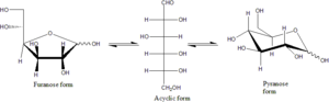 Biochemistry - Conversion between the furanose, acyclic, and pyranose forms of D-glucose