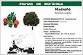 FB2 Madroño.jpg
