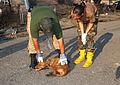 FEMA - 15695 - Photograph by Win Henderson taken on 09-15-2005 in Louisiana.jpg