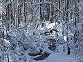 FL Swamp covered in Snow (5303520323).jpg