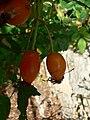 Fale - Giardini Botanici Hanbury in Ventimiglia - 359.jpg