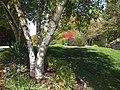 Fall colors (8033503088).jpg