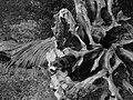 Fallen tree - geograph.org.uk - 656172.jpg