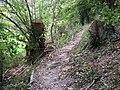 Fallen tree on permissive path near Poynings - geograph.org.uk - 1523785.jpg