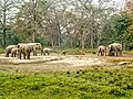 Family of elephants.jpg