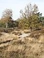 Fischbeker-Heide-Reitweg.jpg