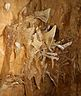Моравский крас. пещера Пунква Моравский крас Чехия экскурсии.