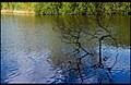 Flickr - Laenulfean - calm lake.jpg