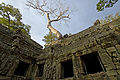 Flickr - don macauley - Ta Prohm.jpg