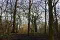 Flickr - ronsaunders47 - CAN'T SEE THE WOOD FOR THE TREES...jpg