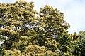 Flora from Parambikulam T R.jpg