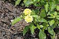 Flora of Kerala 8081.jpg