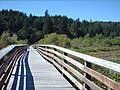 Florence Lake Boardwalk - panoramio.jpg
