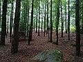 Floresta Encantada Vila do Gerês.jpg