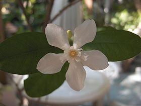 Flower-01-KayEss-1.jpeg