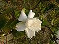 Flower.3.jpg