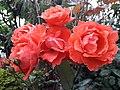 Flower20180428 085459.jpg
