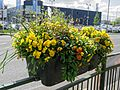 Flower planter on fence, Walthamstow Avenue, London Borough of Waltham Forest, England 01.jpg