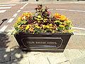 Flowers, Lytham - DSC07166.JPG