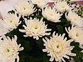 Flowers-6s.jpg