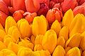 Flowers (2493499438).jpg