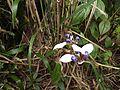 Flowers in Ranomafana.jpg
