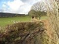Footpath near Cilycwm - geograph.org.uk - 1134315.jpg