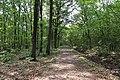 Forêt domaniale de Bois-d'Arcy 53.jpg